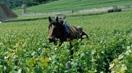 visuel-la-viticulture-1-mini.jpg